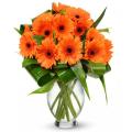 gerbera-flowers
